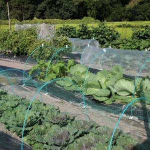 9月末の北摂の家庭菜園