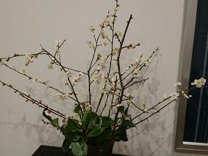 開花(^_^)