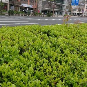 春の風景(^_^)