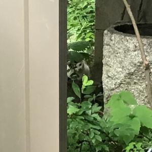 迷い子猫(続編)