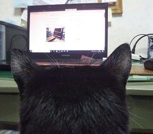 パソコンの画面に見ている猫