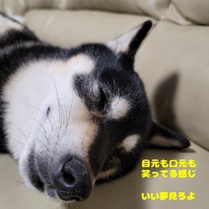 ニコニコ寝てる