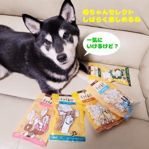 5種類で500円