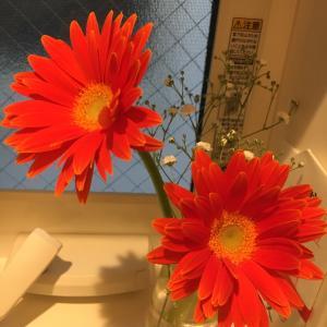 今月の花〜2020年4月①〜の巻