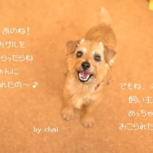 サルvs犬