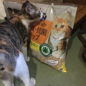 猫砂&おやつを頂きました♪