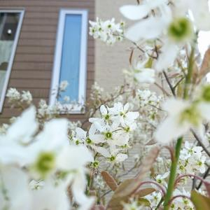 ジューンベリーのお花とワイヤー鳥かご