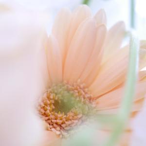 コロナ支援 お花の宝箱