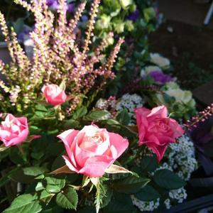 園芸セラピー 草花寄せ植え