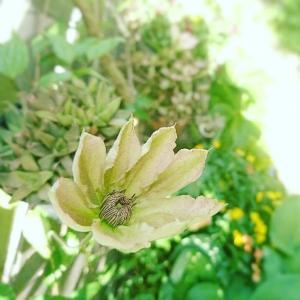 お花いじりで自分調え。
