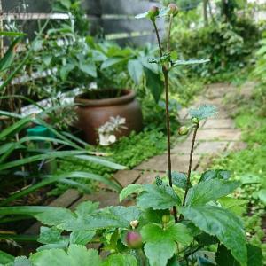 お庭から、秋の気配
