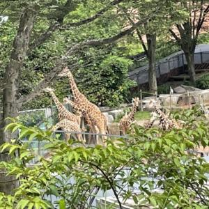 コロナ禍の多摩動物公園ガイド