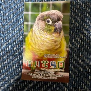 移動支援で掛川花鳥園へ!お姉ちゃんとお守りのリストバンド探してプレゼントして貰いました!