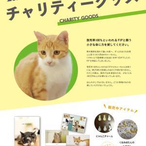 致死率がほぼ100%という恐ろしい病気FIP(猫伝染性腹膜炎)と戦うちゃーちゃんを応援して下さい。