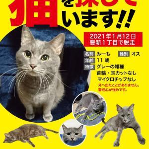 迷子猫さん 無事お家に帰る事が出来ました!!!