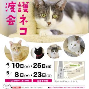 第93 94回 保護猫カフェQsmet(くすめっと)定例里親譲渡会