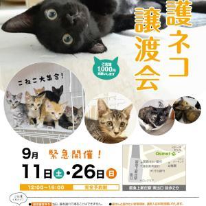 第97 98回 保護猫カフェQsmet(くすめっと)定例里親譲渡会
