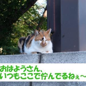 街の猫くんの、いつもの光景 (シーンその③)