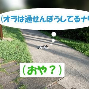 意地悪をする街の猫くん