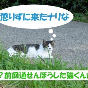 オイラは猫スパイseason3(任務その1の①)