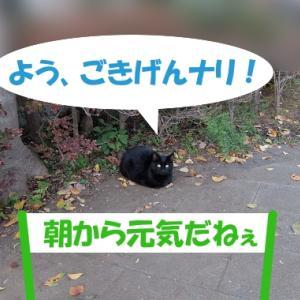 オイラは猫スパイseason2(任務その2の①)