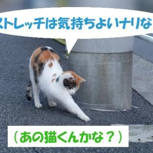 オイラは猫スパイseason3(任務その3の①)