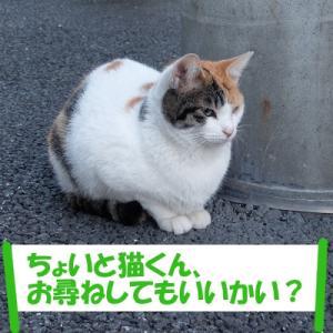オイラは猫スパイseason3(任務その3の②)