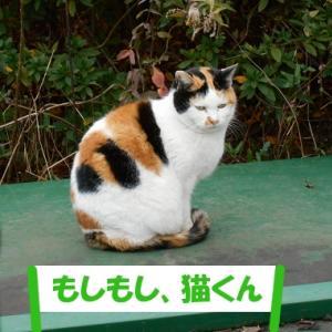 令和2年の出来事を予想する街の猫くん つづき1