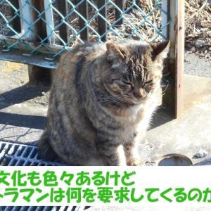 令和2年の出来事を予想する街の猫くん つづき3