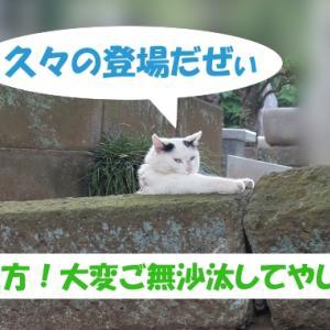 令和2年の出来事を予想する街の猫くん つづき4