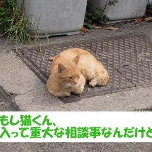 令和2年の出来事を予想する街の猫くん つづき5