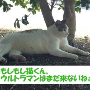 令和2年の出来事を予想する街の猫くん つづき6