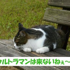 令和2年の出来事を予想する街の猫くん つづき7