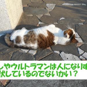 令和2年の出来事を予想する街の猫くん つづき8