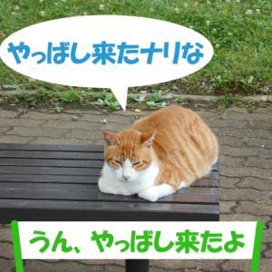 オイラは猫スパイseason4(任務その1)