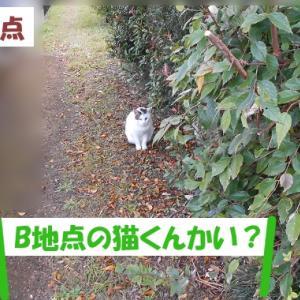 オイラは猫スパイseason4(任務その2)