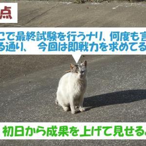 オイラは猫スパイseason4(任務その3)