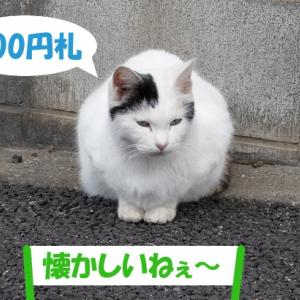 昭和を語る街の猫くん②
