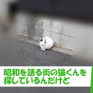 昭和を語る街の猫くん①