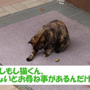 昭和な街の猫くんを探して