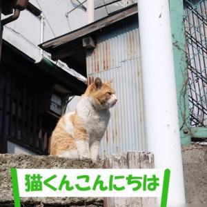 いつもの猫くんじゃない街の猫くん その②