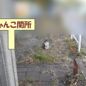 いつもの猫くんじゃない街の猫くん その③の1