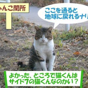 いつもの猫くんじゃない街の猫くん その③の2