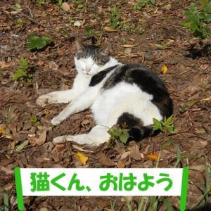 新年の挨拶をした猫くんを再び訪ねてみた