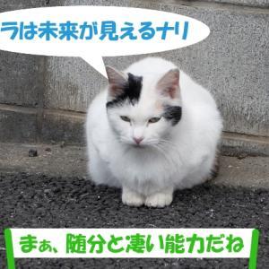 未来が見える、街の猫くん