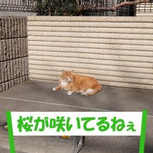 紛らわしい、街の猫くん