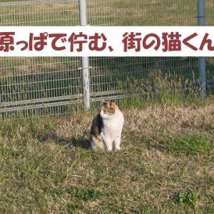 街の猫くんの日常を追ってみた