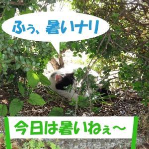 暑い日に、街の猫くんが欲しい物①