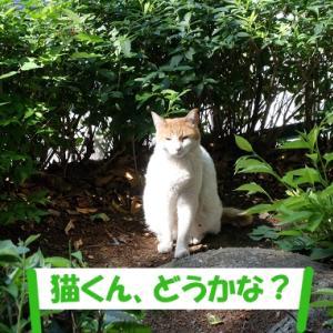 暑い日に、街の猫くんが欲しい物②