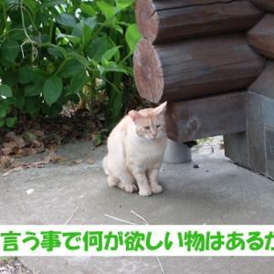 梅雨の日に、街の猫くんが欲しい物①